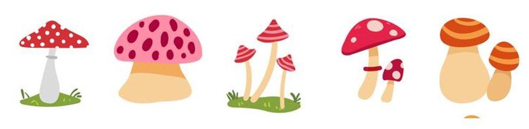 Conoscere il fungo